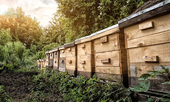Blumen Bienen suesser Honig