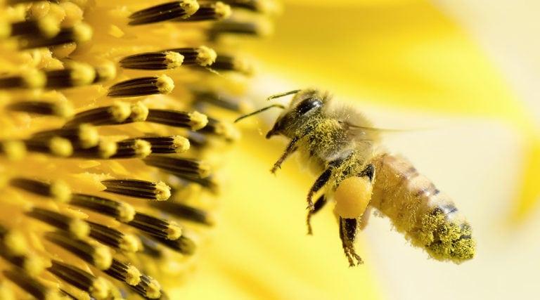 Von Blumen, Bienen und ihrem süssen Honig