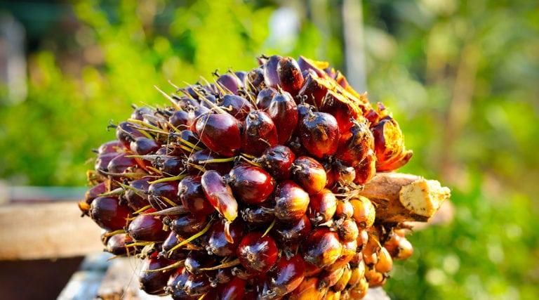 Der grosse Palmöl unterschied